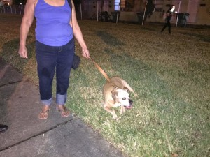 stray dog in sweetwater adopted